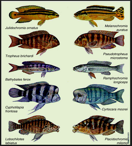 evolution fish_to_FISH