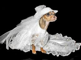 dog_gone_marriage3
